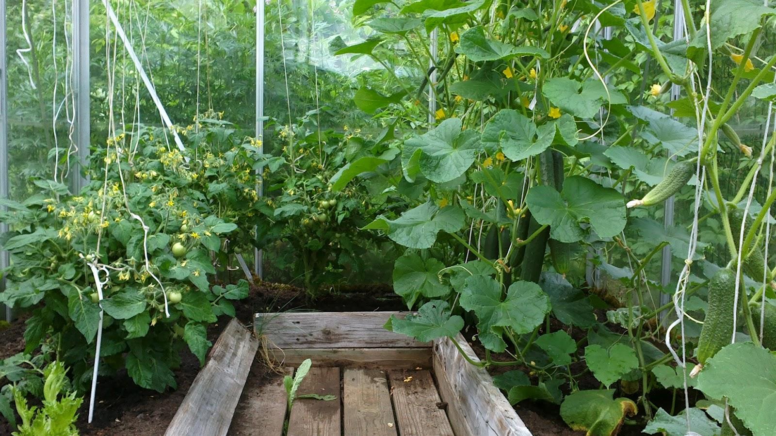 Satoa tulossa? – Getting some harvest?