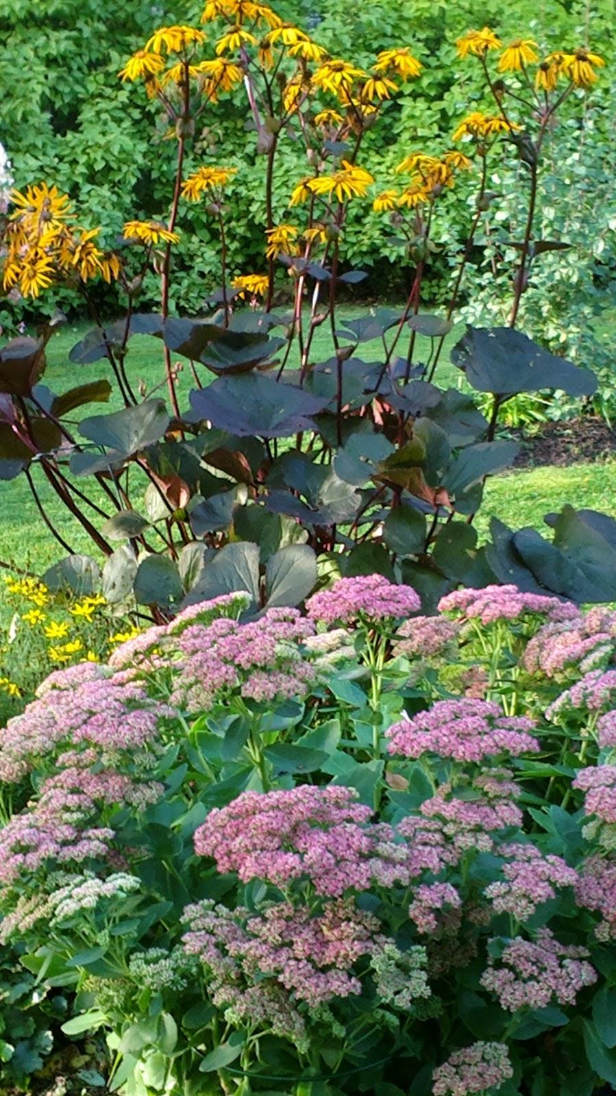 Pitkästä aikaa puutarhatöissä – Gardening after a long time