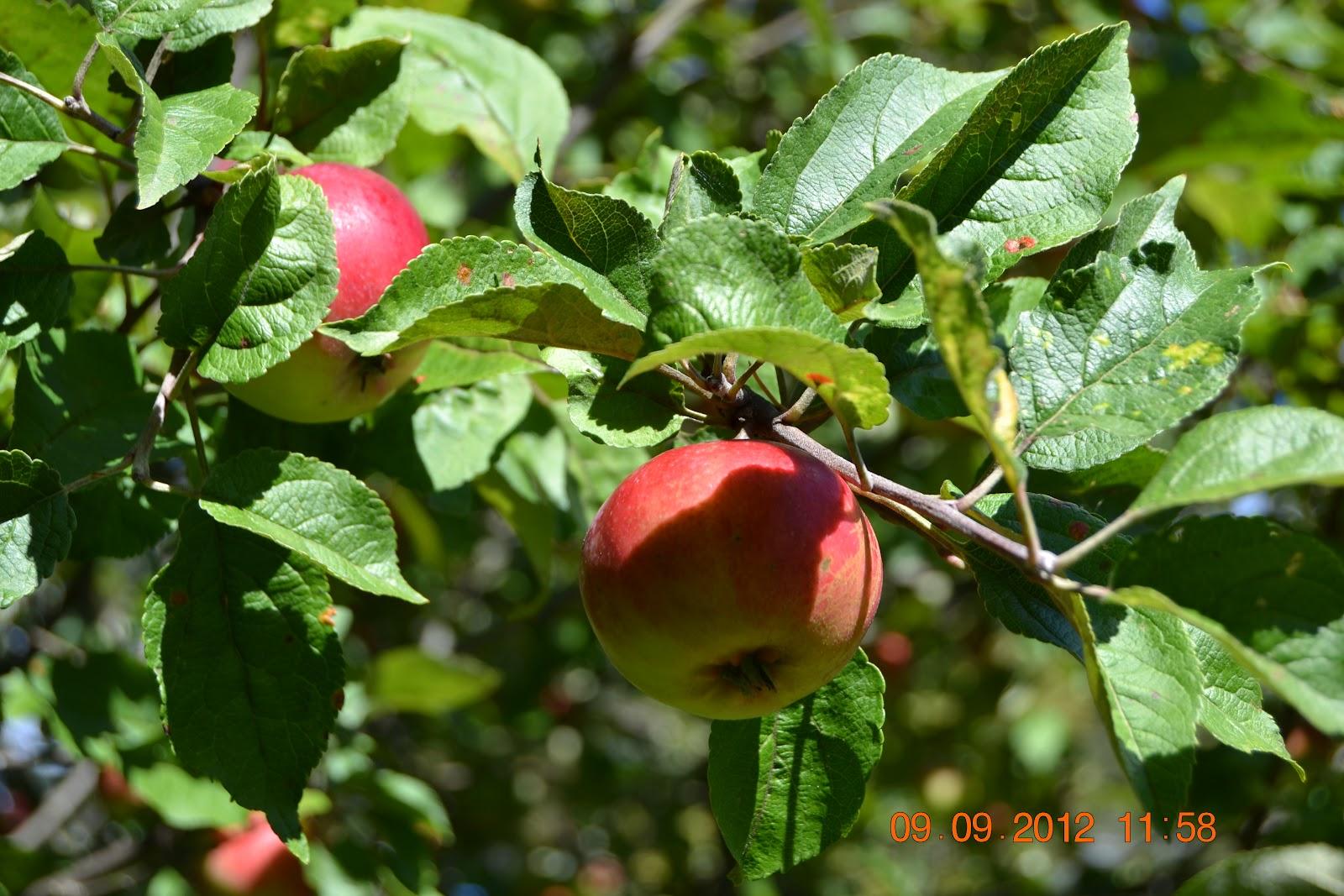 Satokuvia – Some harvest pictures