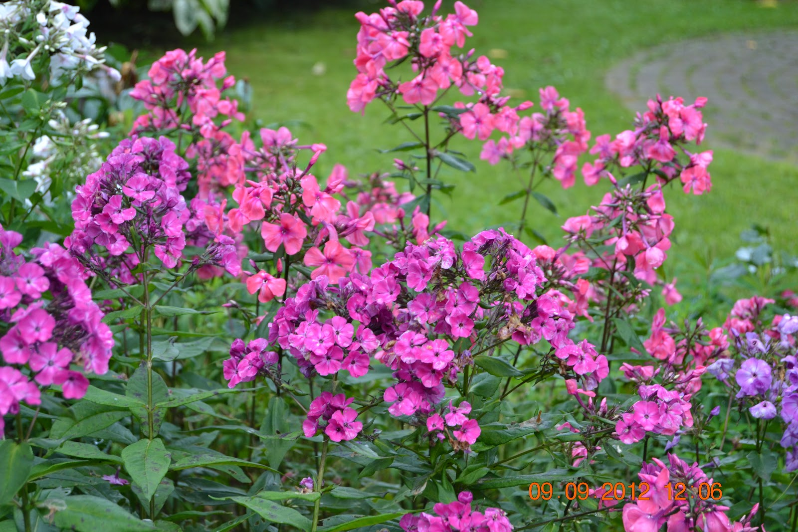 Viimeisiä kukkijoita – The last bloomers