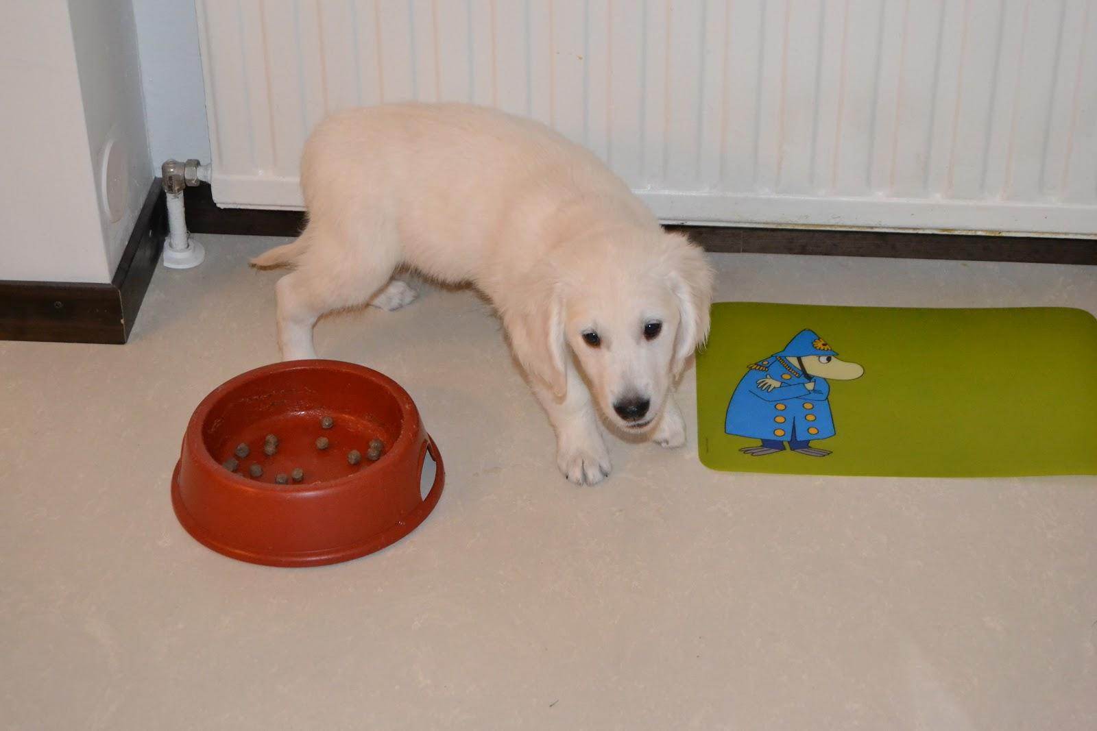 Mikki, uusi perheenjäsen – Mickey, a new family member