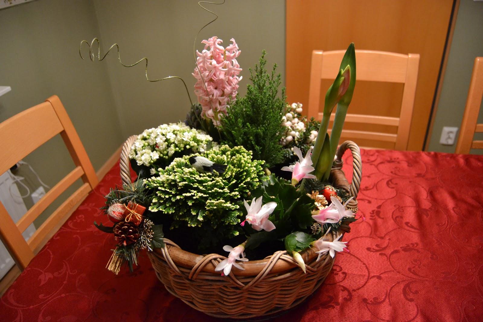 Joulukukkia ja Mikin viikonloppueloa – Christmas flowers and Mickey's weekend