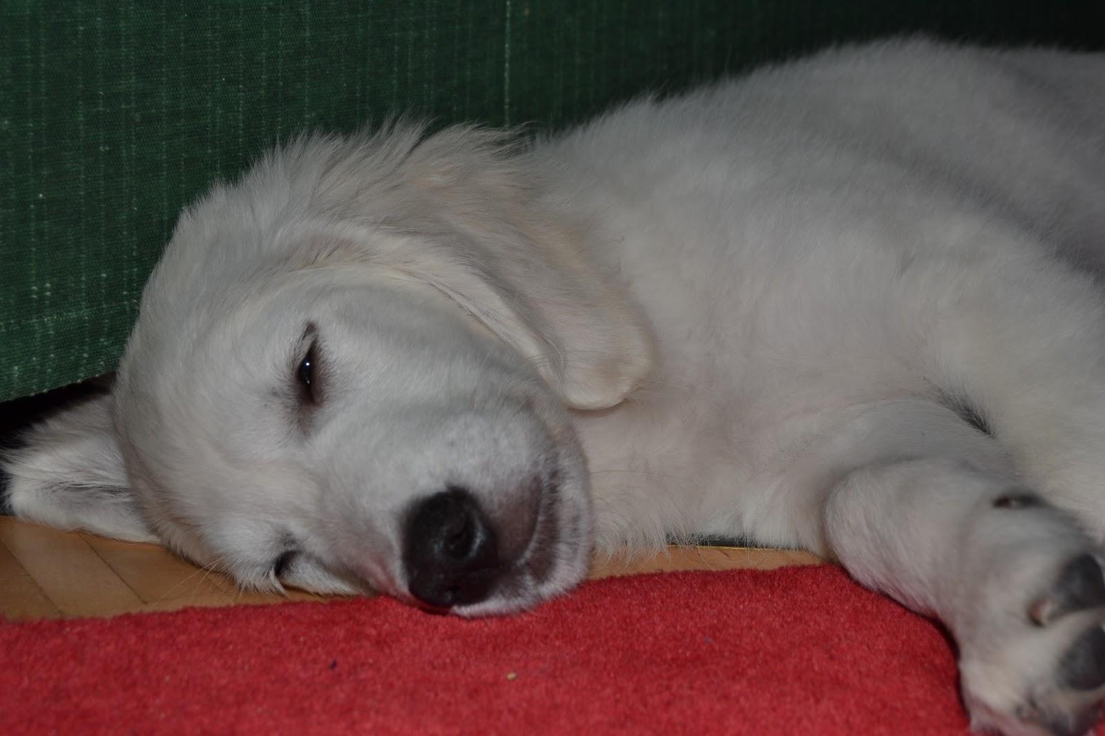 Koiran elämää – Dog's life