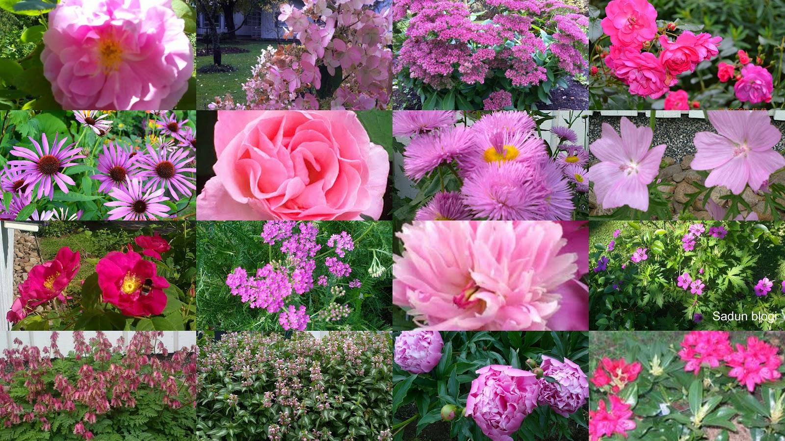 Kukkakollaaseja – Flower collages
