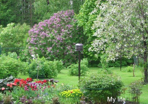 Kevään odotusta – Waiting for spring