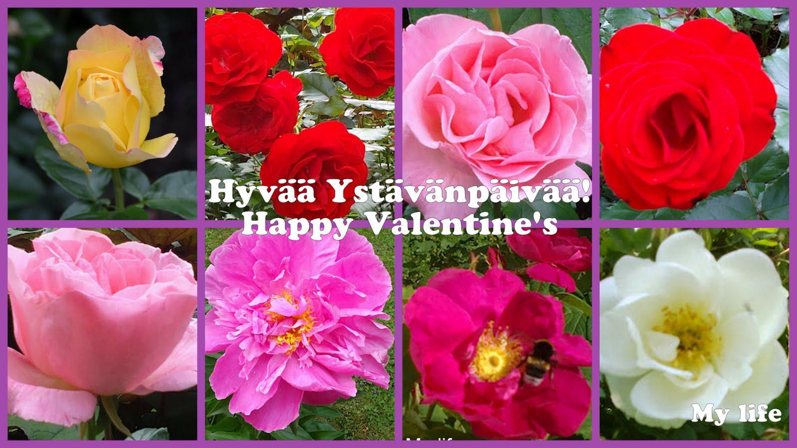 Hyvää Ystävänpäivää! – Happy Valentine's Day!