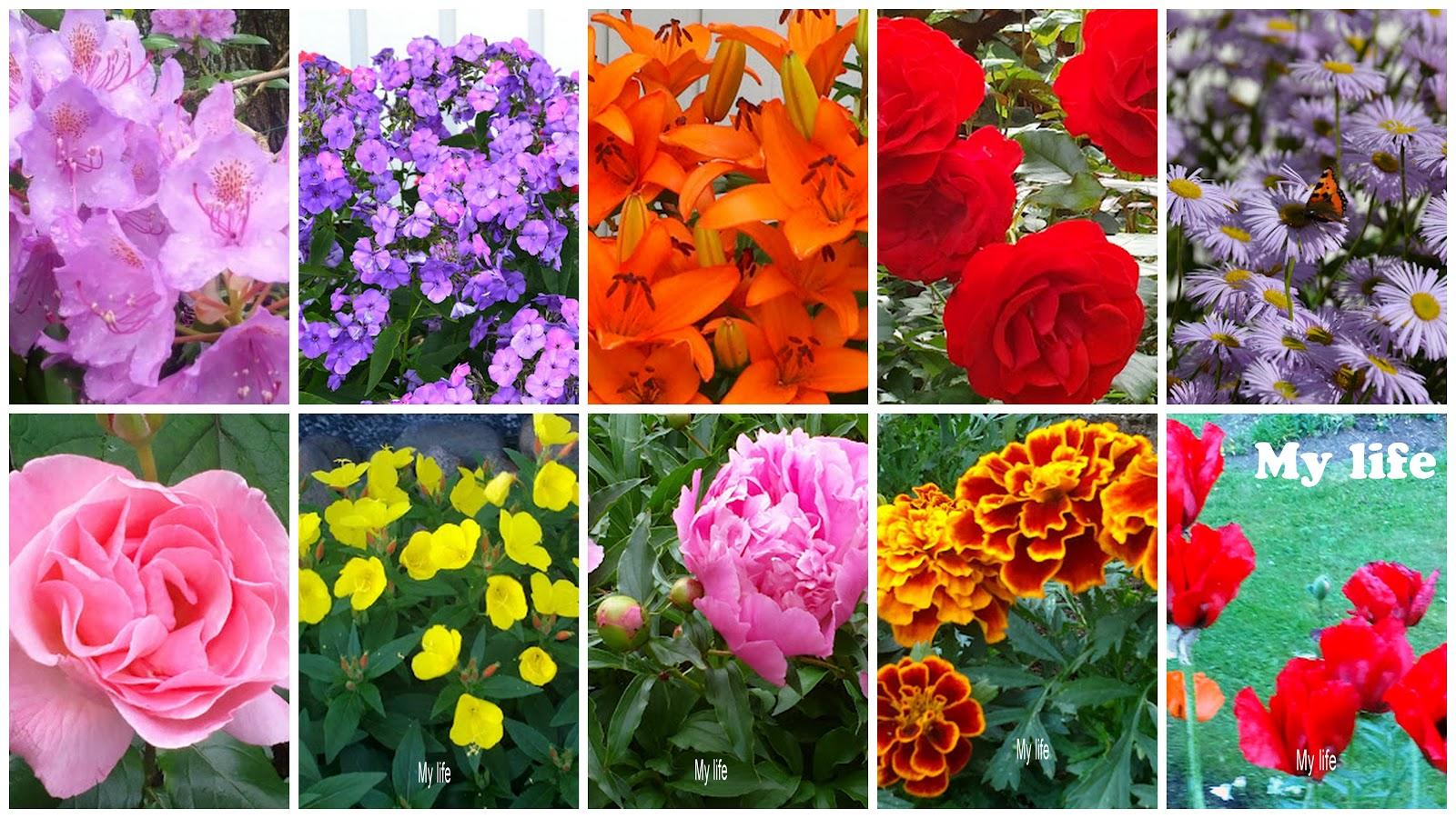 Väriä elämään! – Some color!