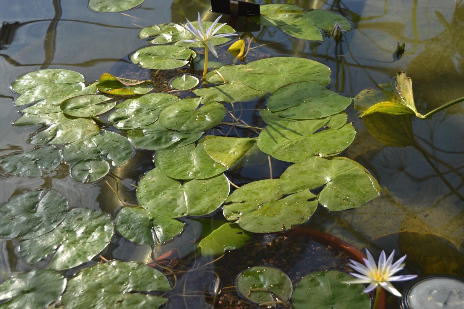 Vierailu Helsingin Kasvitieteellisessä puutarhassa – Visiting The Botanical Garden in Helsinki