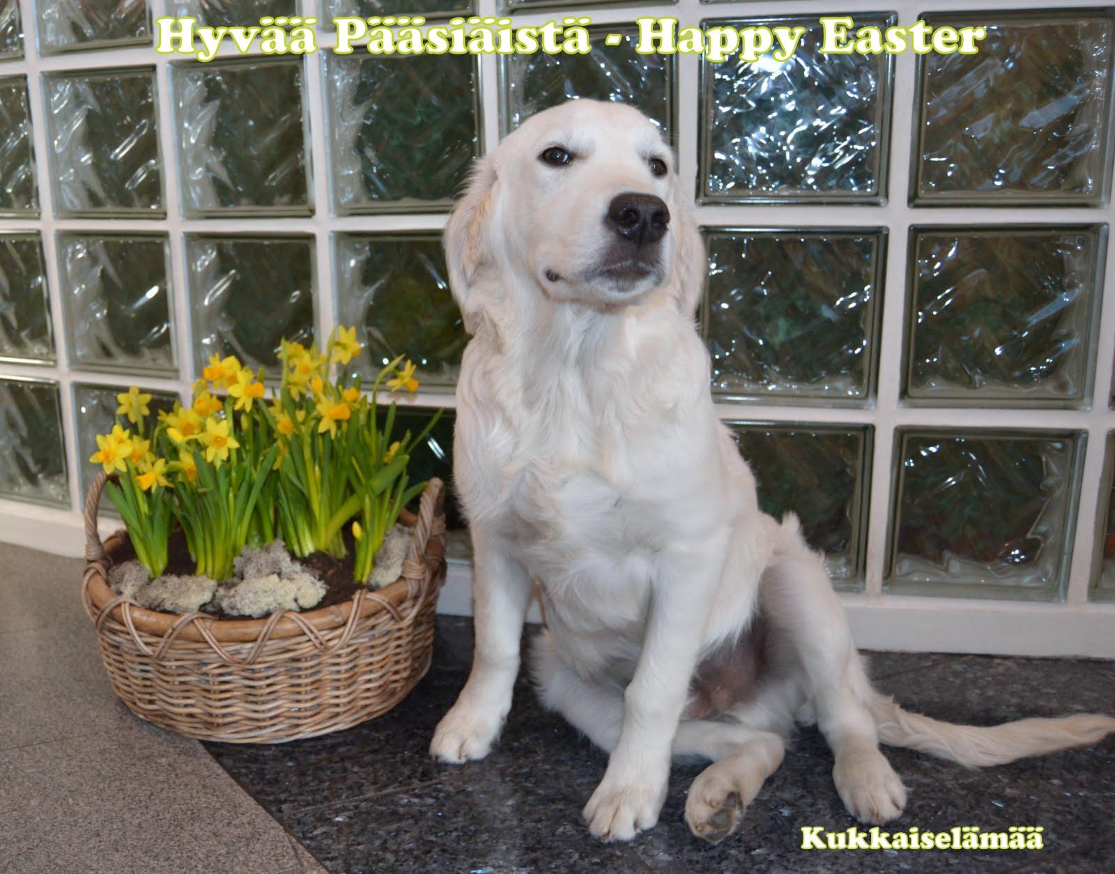 Hyvää Pääsiäistä – Happy Easter