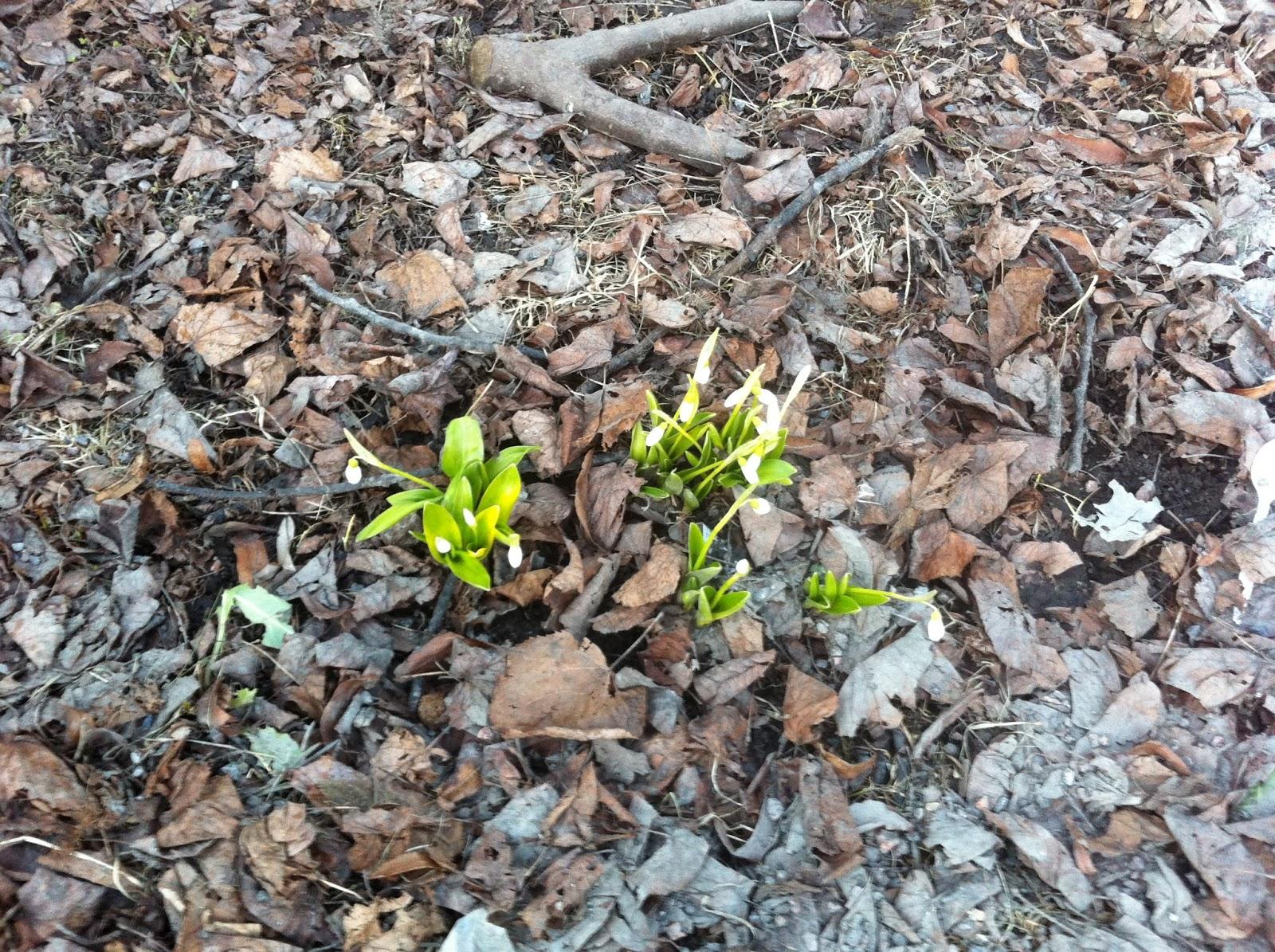 Kevät on tullut Helsinkiin – It's finally spring here in Helsinki