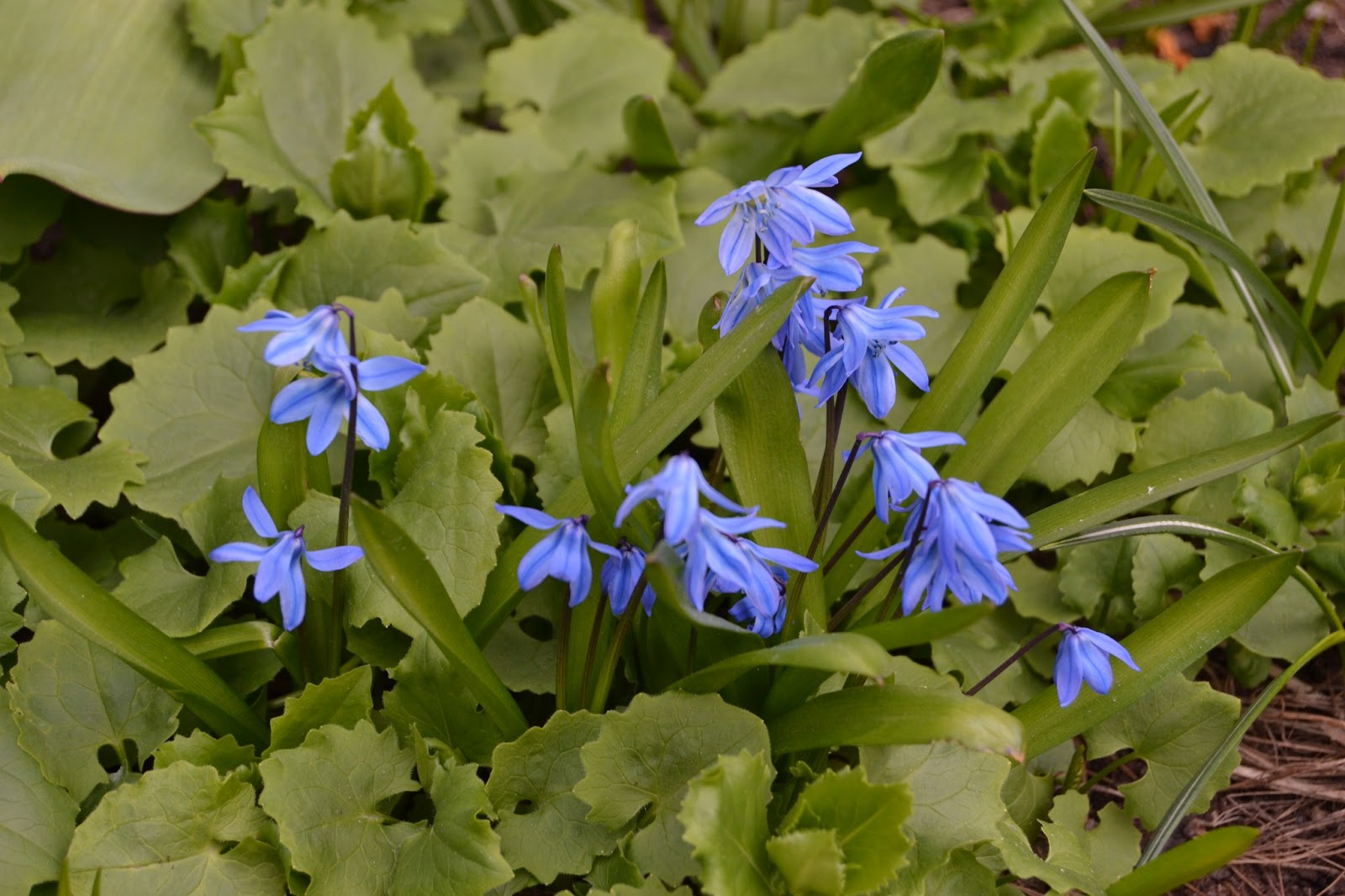 Keväinen puutarha – Vernal garden