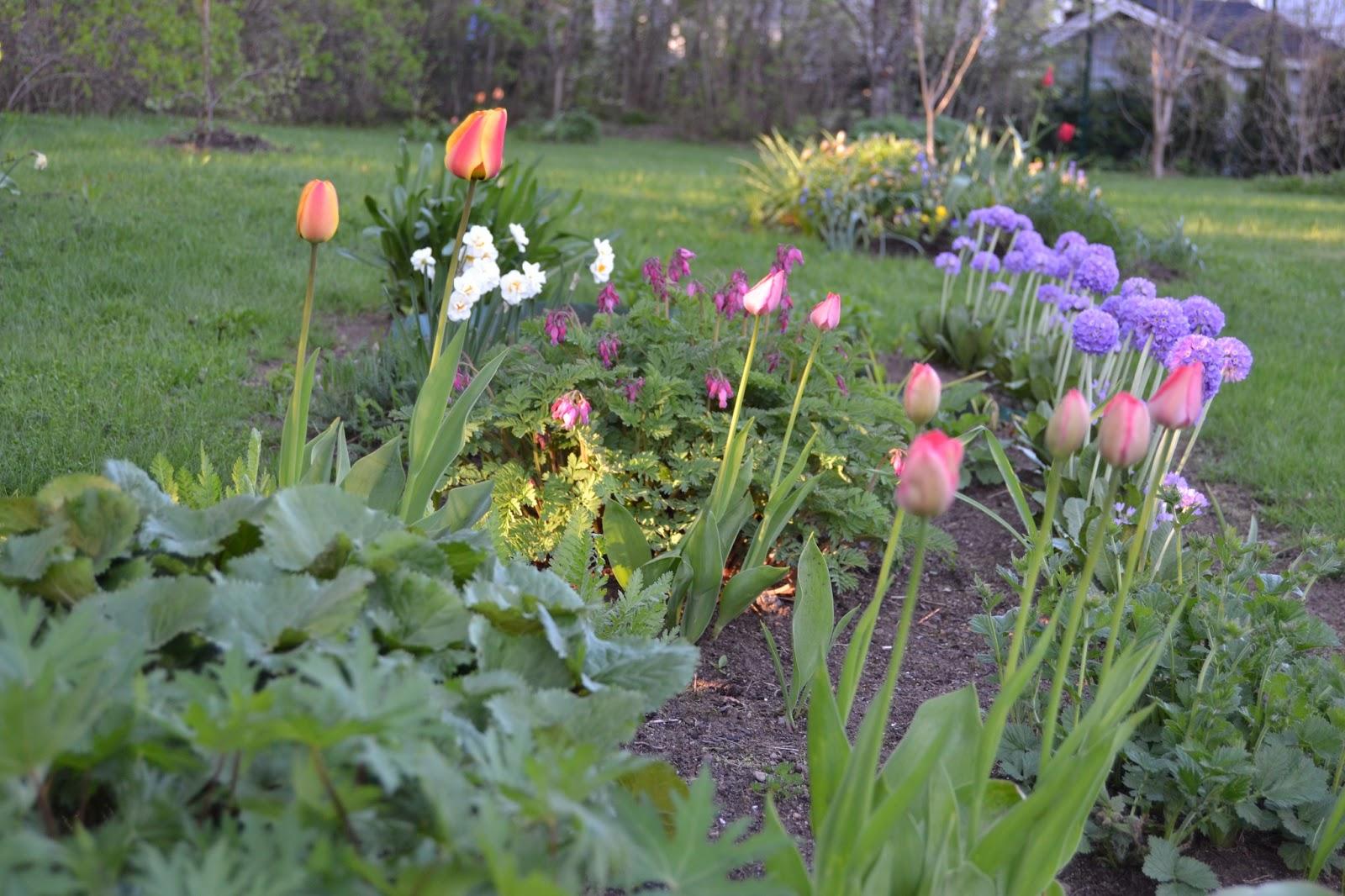 Ihana kevät! – Wonderful spring!