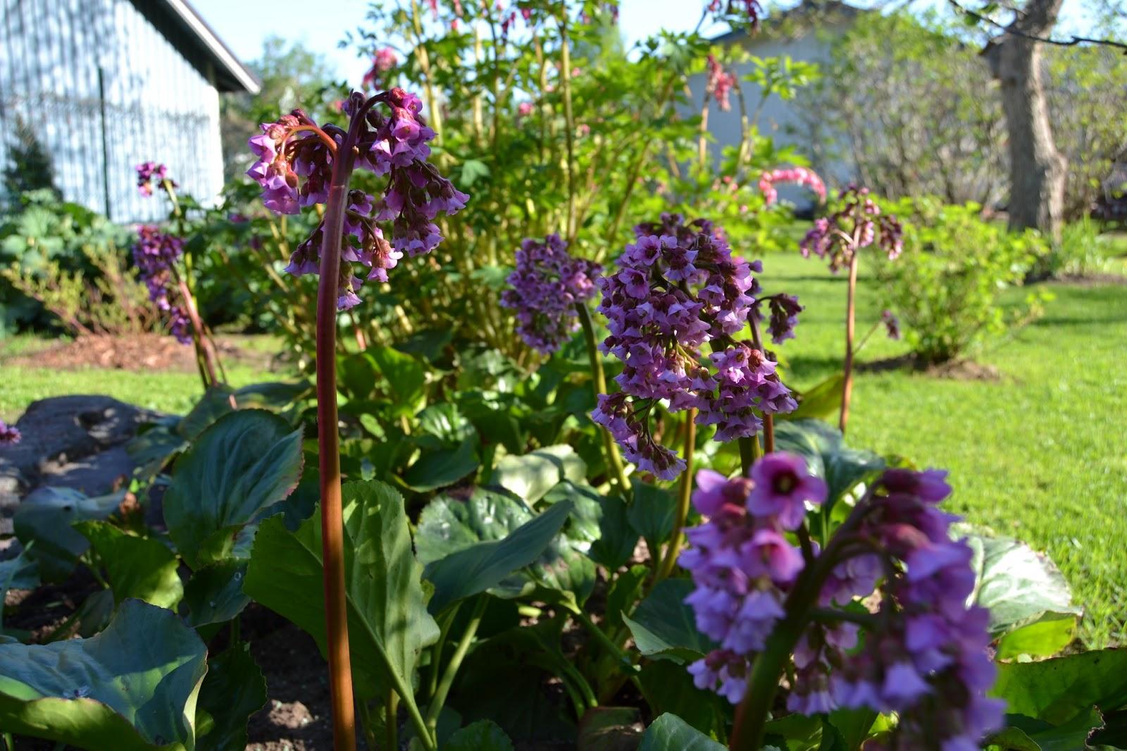 Aurinkoista puutarhaviikkoa! – Sunny gardening week!