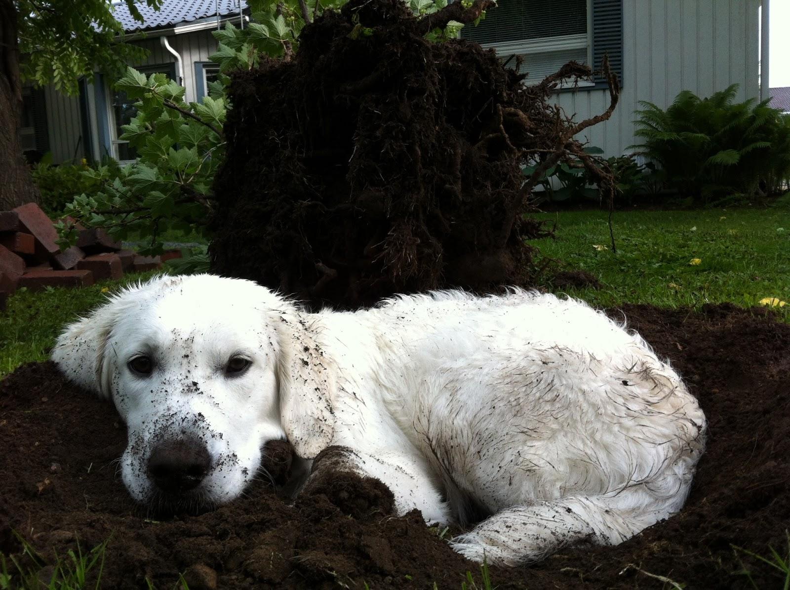Mikkimäistä sunnuntaita! – Muddy Sunday!