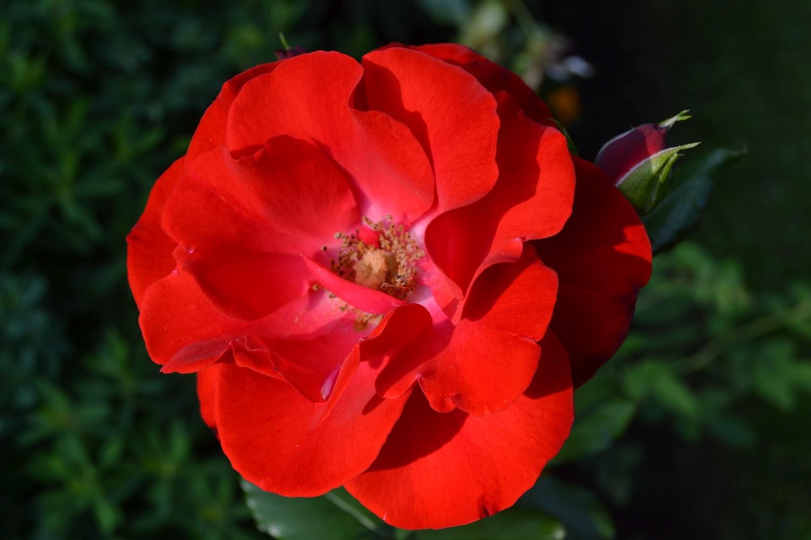 Kukkatykitystä – Flower power