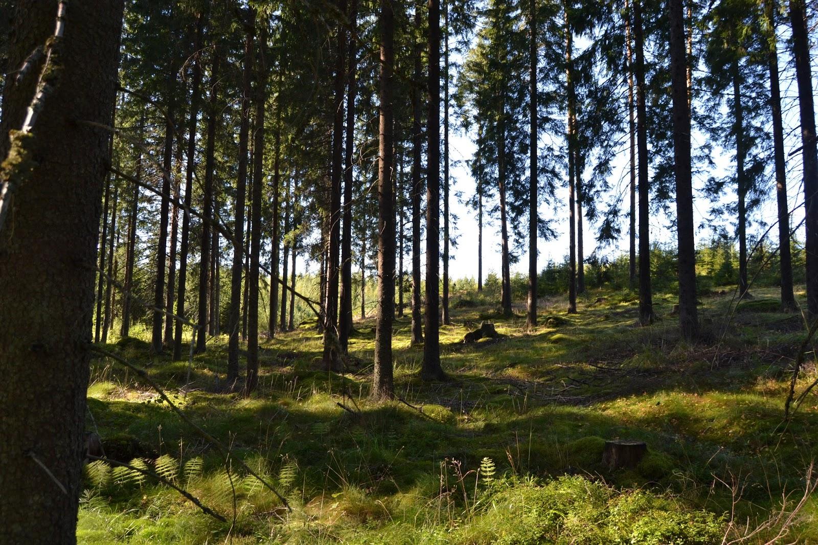 Jos metsään haluat mennä nyt… – Picking mushrooms..