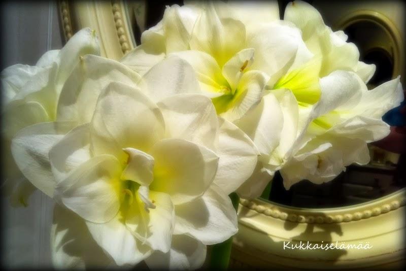 Kukkia ja kuperkeikkoja ;O) – Flowers and somersaults..