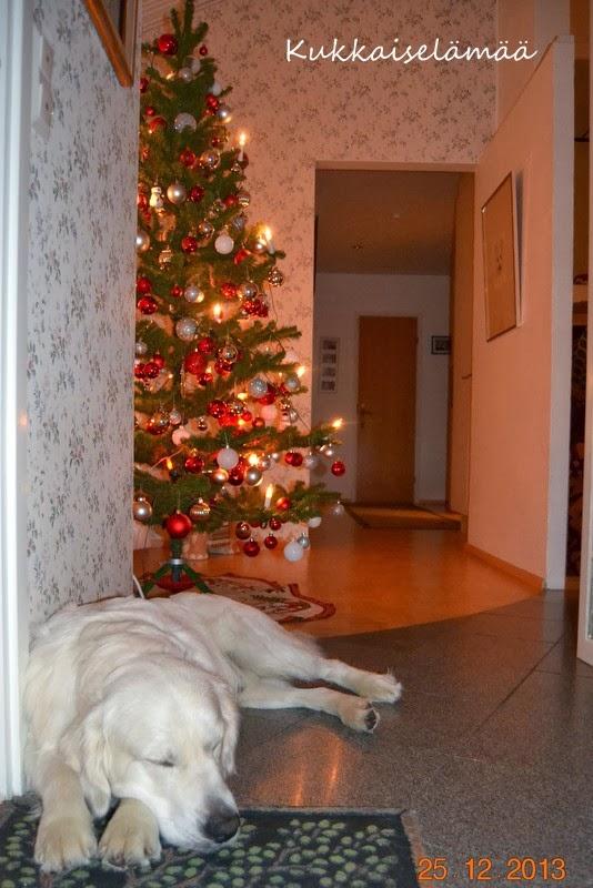 Aatto juhlittu – Christmas eve