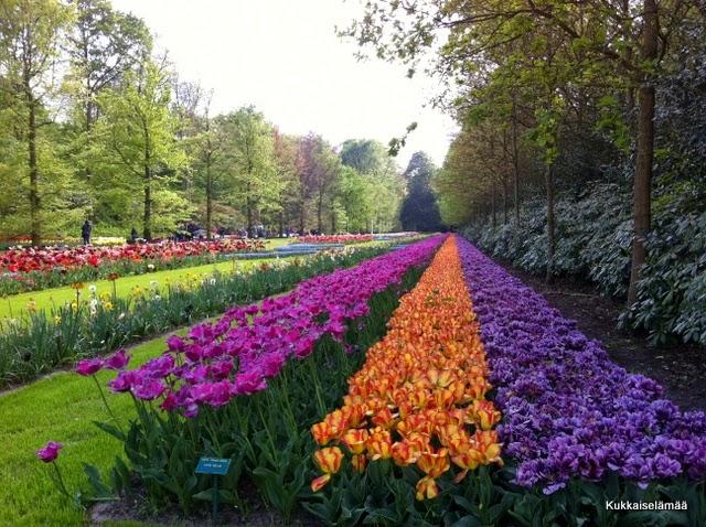 Tulppaanien Keukenhof: osa 2 – Tulips in Keukenhof: part 2