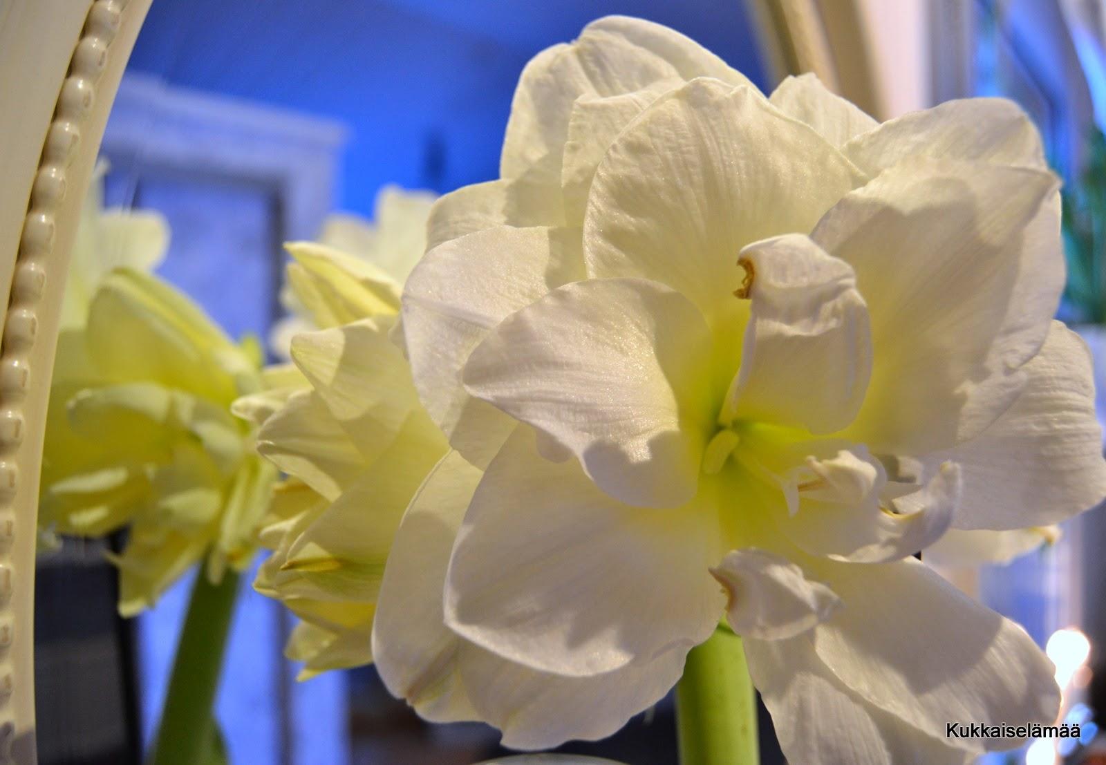 Voiko ihanampaa olla? – The most beautiful flower