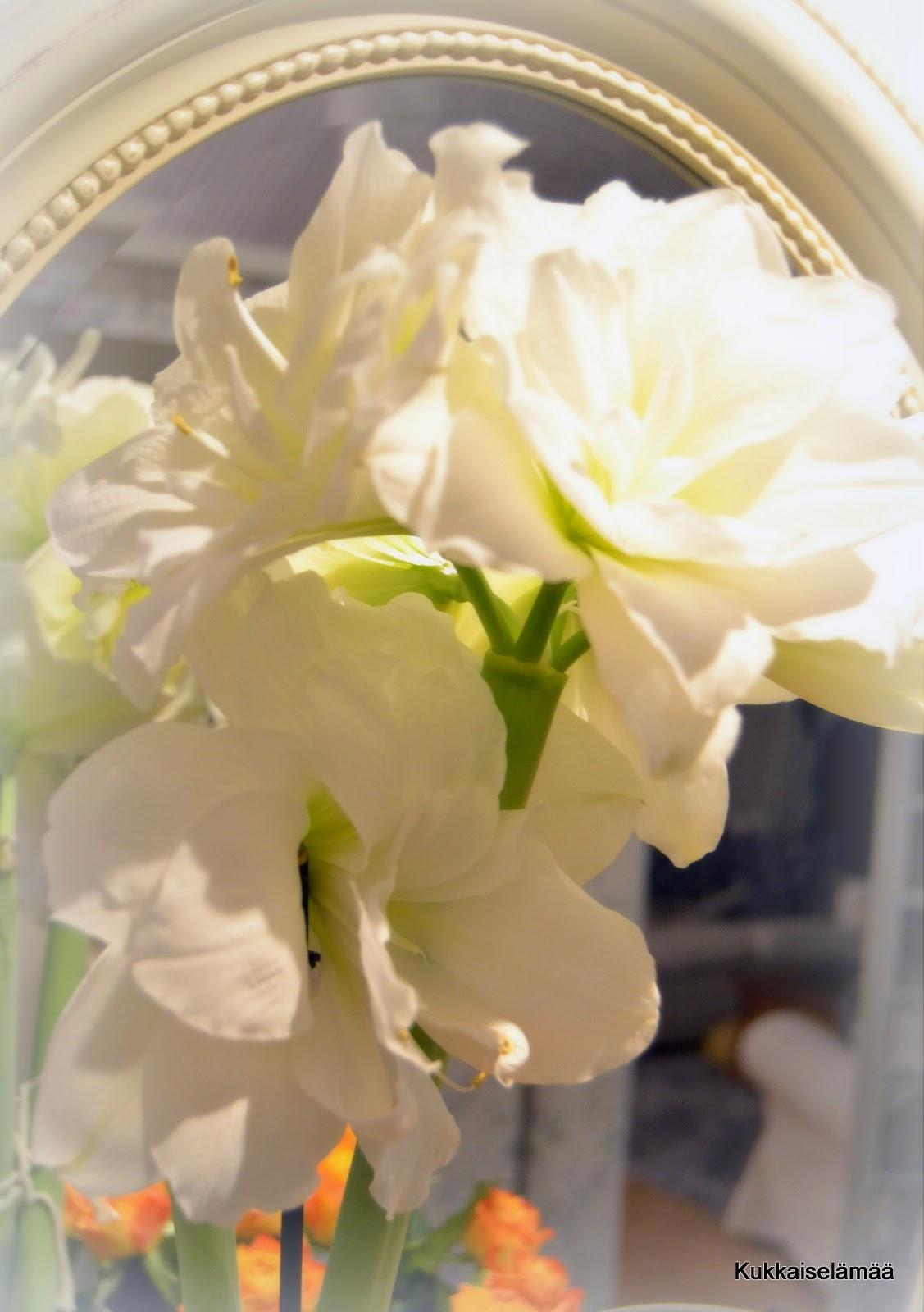 Kukat mielessä.. – Flowers