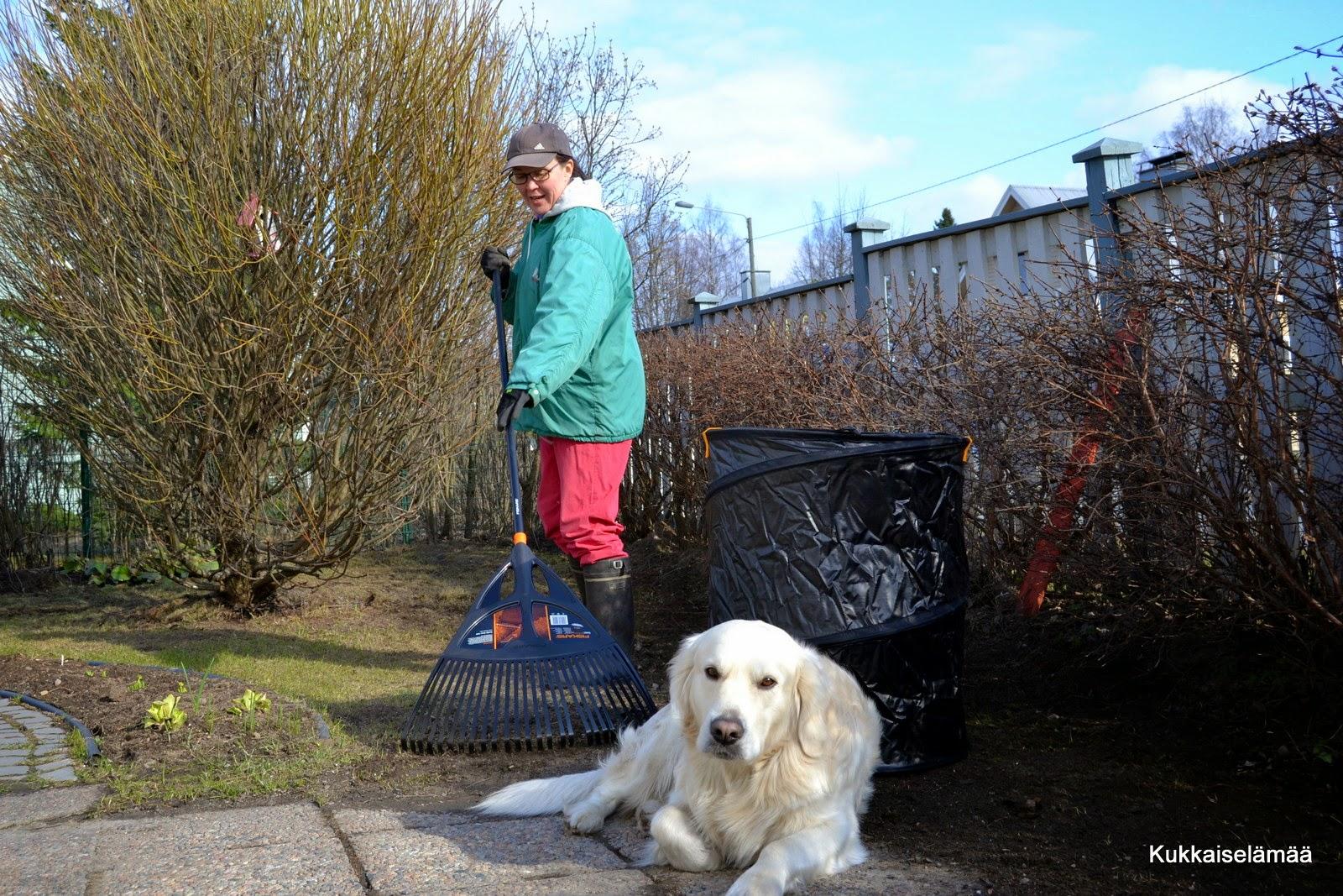 Mikin kanssa pihahommissa – Gardening with Mickey