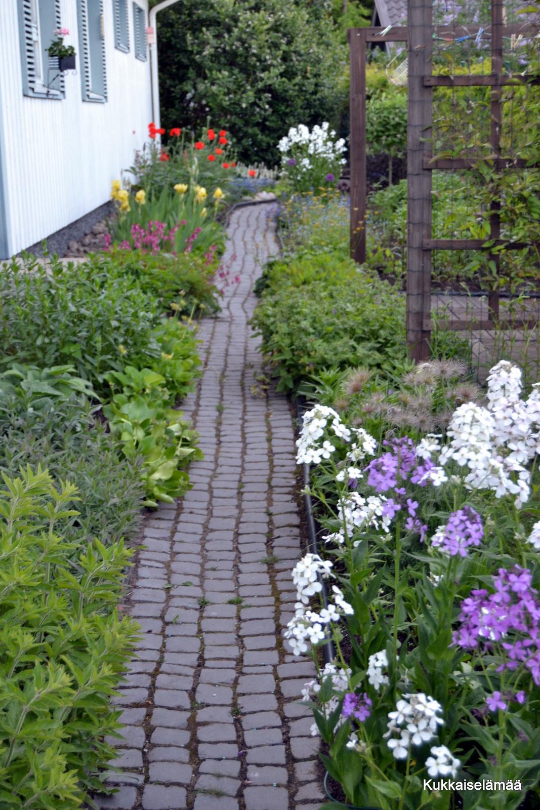 Sateen jälkeen – Our garden yesterday