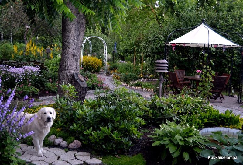 Mikin puutarhaelämää – Mickey in our garden