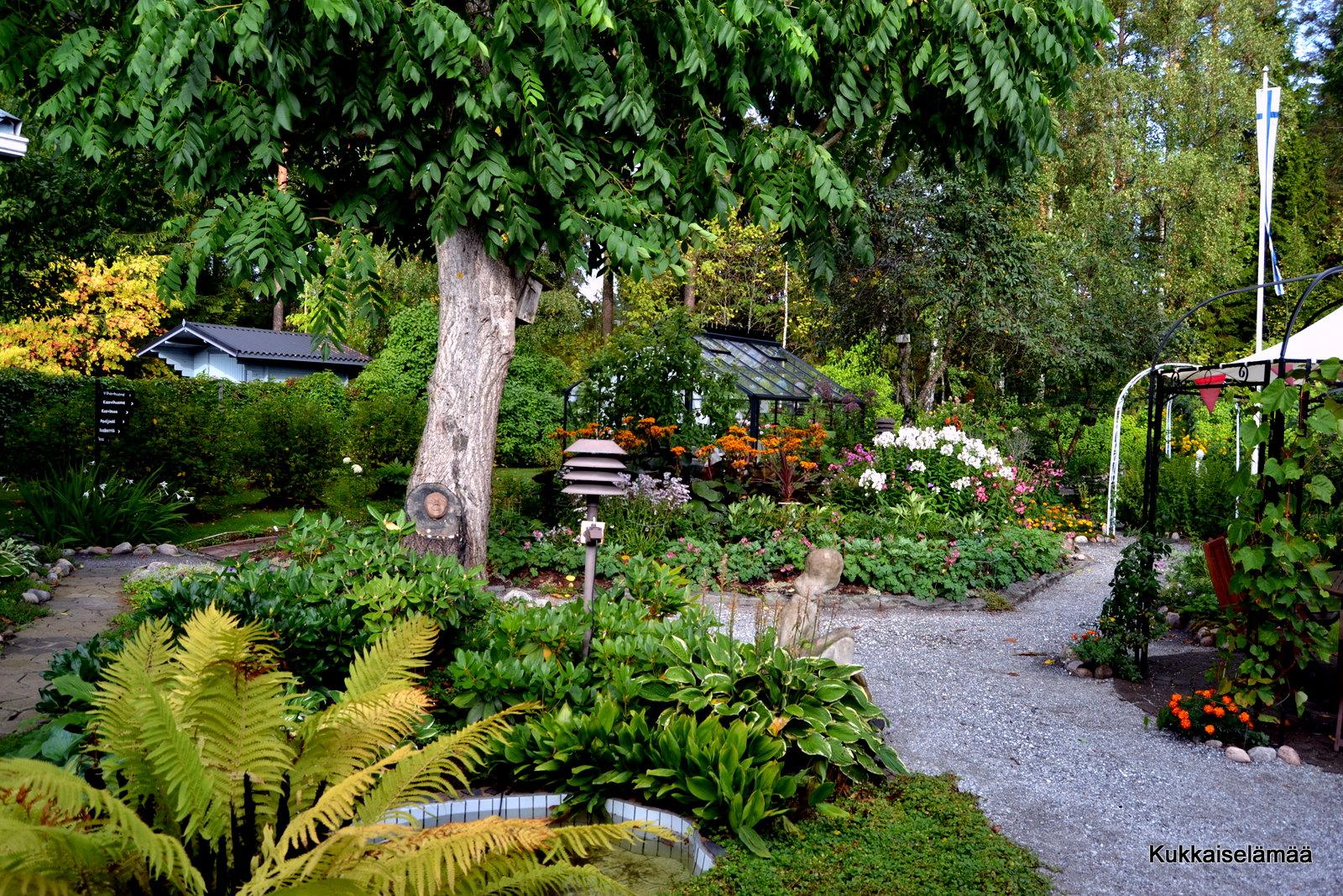 Syksyinen puutarha ja vähän muutakin – Autumnal garden..