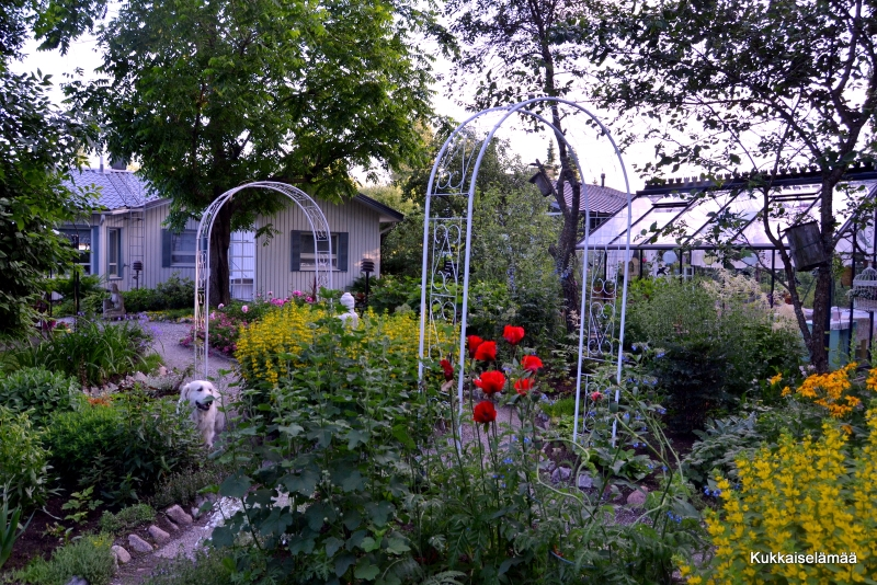 Kukkia, kukkia ja bloggaritapaaminen – Our Midsummer garden