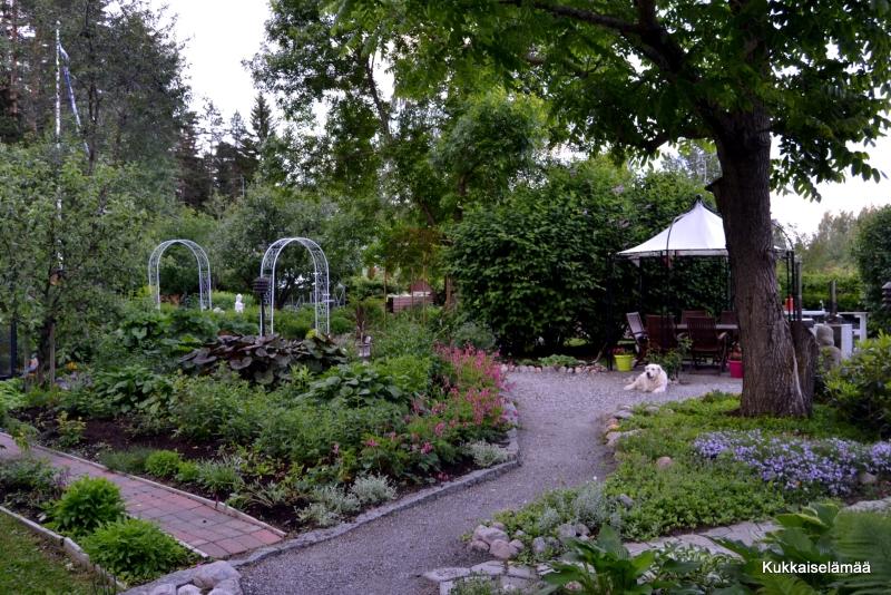 Puutarha kesäkuussa – Our garden in June