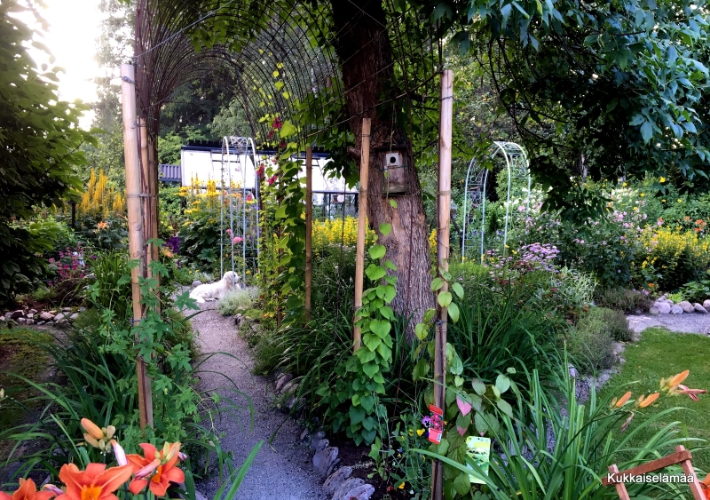Mikki puutarhassa – Mickey in our garden