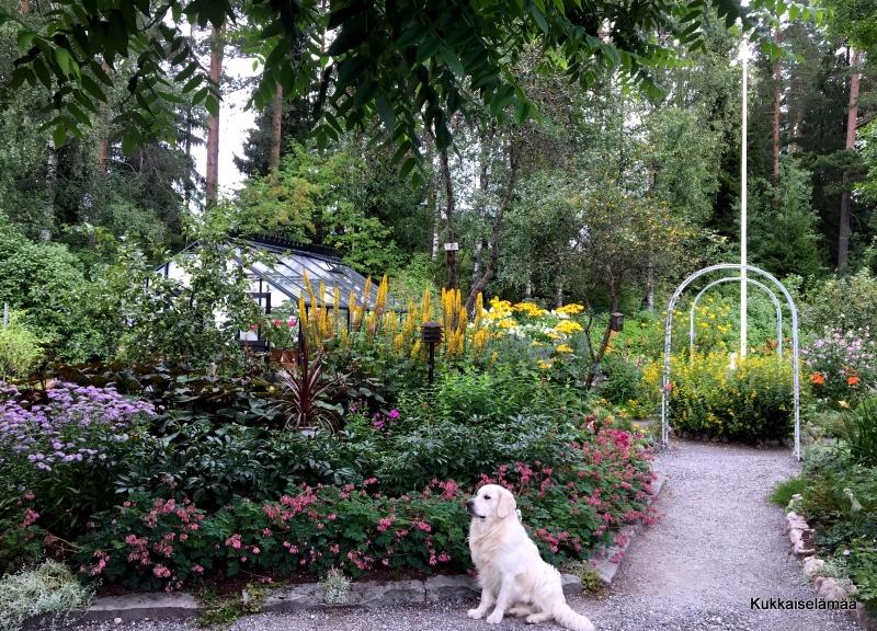 Mikki ylpeänä esittelee ;O)  ja ARVONTAMUISTUTUS! – Mickey's garden tour