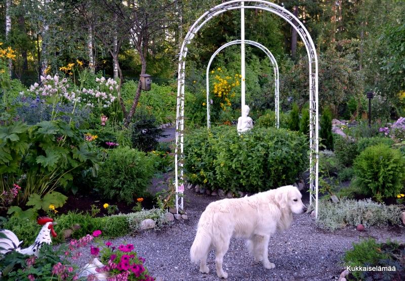 Mylläystä puutarhassa.. – Gardening..