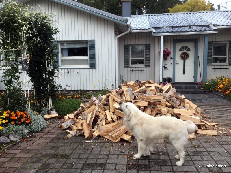 Mikin kanssa halkohommissa – Wood Rack