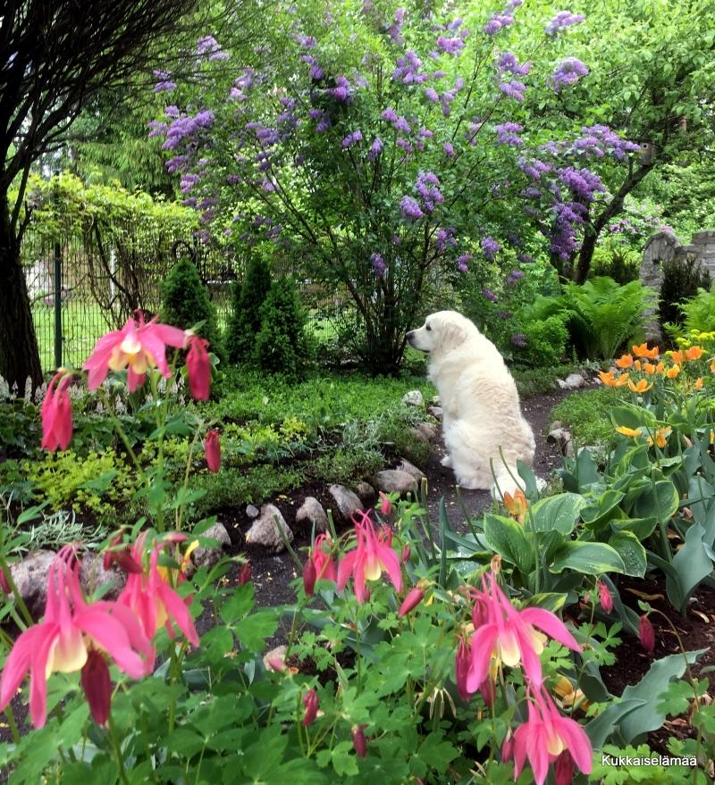 Kukkahommia sateellakin