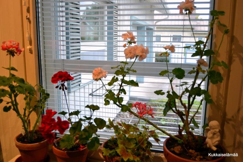 Kukkia puutarhasta ja kirja-arvonnan voittajat!