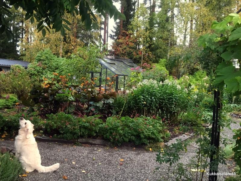 Puutarha tänään.. – Our garden today..