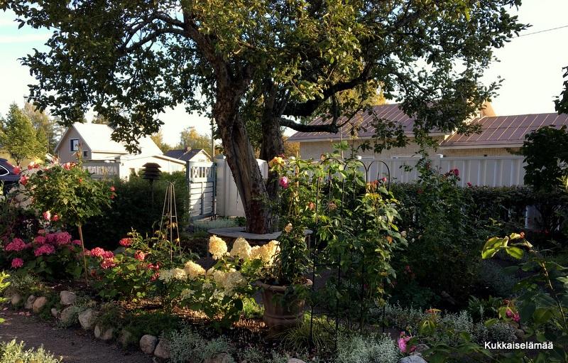 Kukat, puutarha ja …