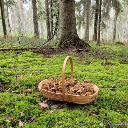 sienimetsässä