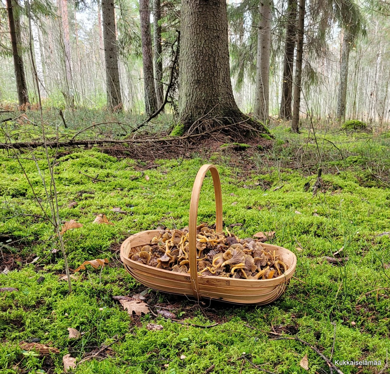 Sienestyksen hurmaa!