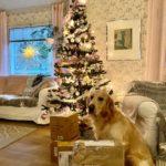 Mortti ja joulukuusi