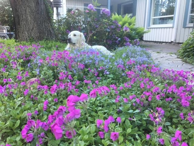 Kukkaiselämää osa 8 – Hyvä tahto