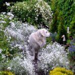 Mikki Kukkaiselämää-puutarhassa