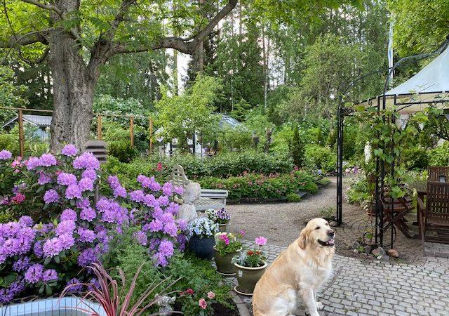 Mukana Avoimissa puutarhoissa + emämoka!